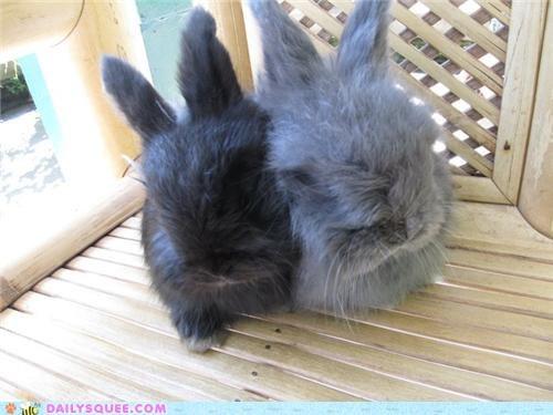 bunnies bunny cartoons nomenclature reader squees show TV - 4982079488