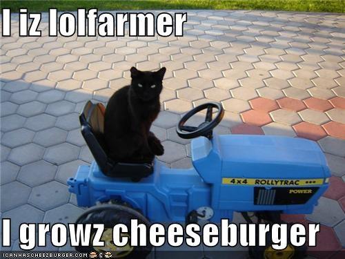 Cheezburger Image 4982735616