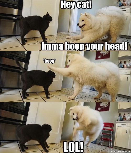 doggeh,kitteh,Sundog