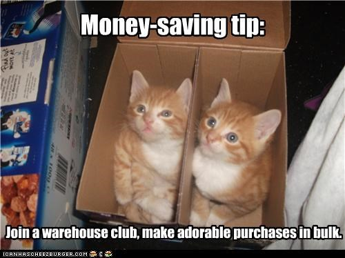 advice Bulk caption captioned cat Cats kitten money purchase saving tabbies tabby tip
