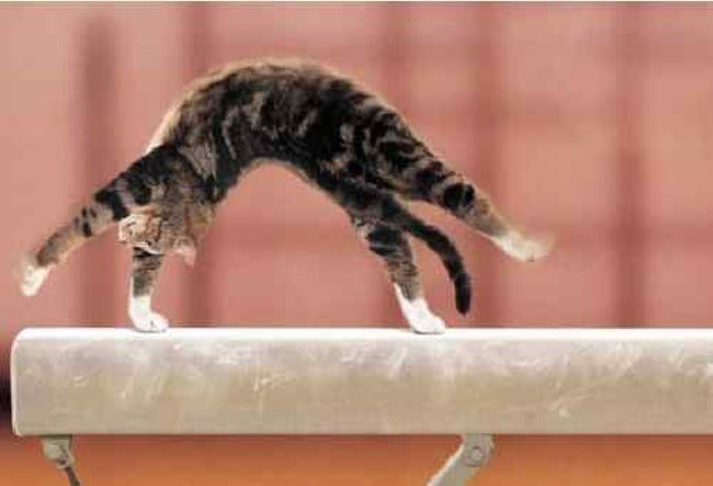 flexible Gravity Cats - 4983045