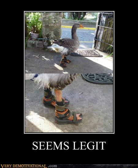 duck,goose,Pure Awesome,sandals,seems legit,wtf