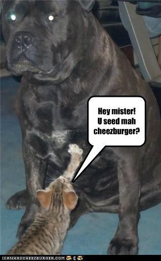 Cheezburger Image 4983824384