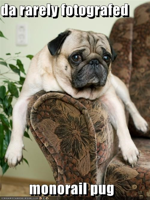 couch,monorail,monorail dog,monorail pug,pug