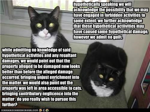 when lawyers adopt cats