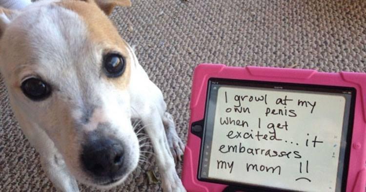 Funny dog shaming photos.