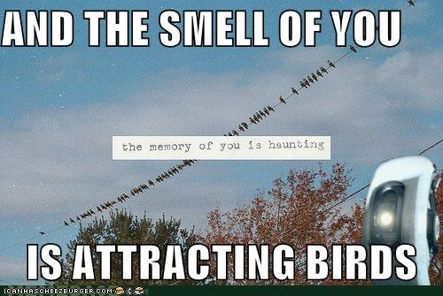 birds carrion haunting hipsterlulz smell - 4984990976