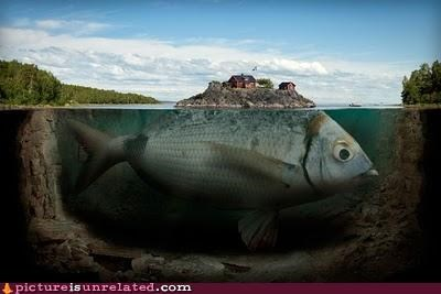 eat fish huge scary town wtf