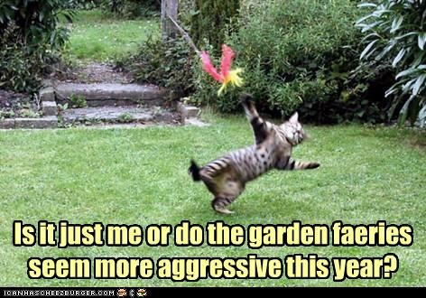 aggressive caption captioned cat faeries fighting garden more opinion ow pain question - 4985868544