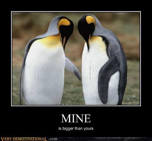 animals hilarious no no tubes penguin - 4985918208