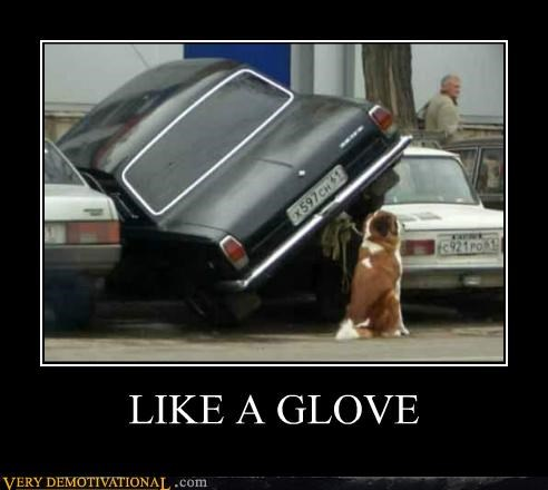 car glove hilarious parking wtf