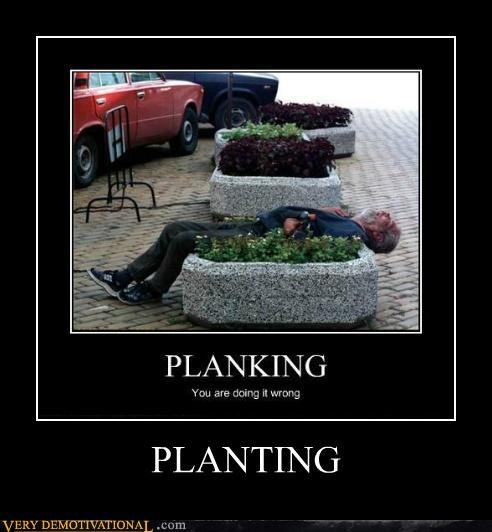 hilarious,Planking,plants,pot,wtf