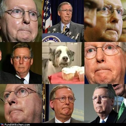 cupcakes dogs mitch mcconnell political pictures - 4986831872