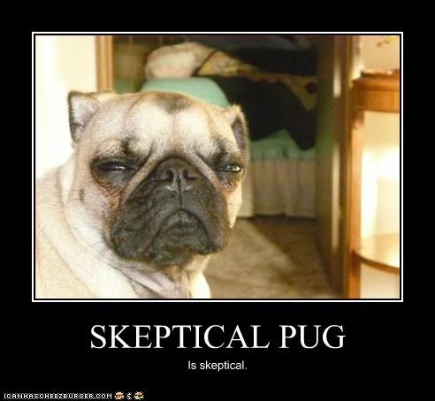 SKEPTICAL PUG Is skeptical.