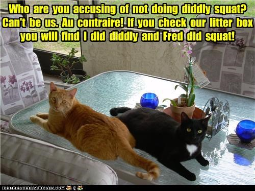 caption captioned cat Cats diddly squat double meaning on the contrary pun tabby - 4987415552