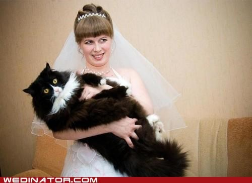 bride Cats funny wedding photos Hall of Fame - 4987450112