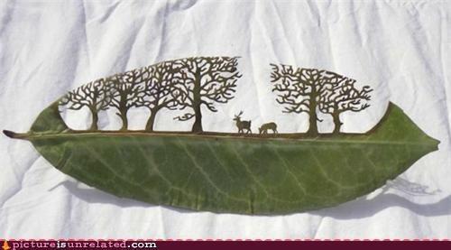 art leaf nature skill wtf