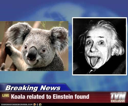 Breaking News - Koala related to Einstein found