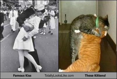 Cats,famous kiss,kissing,kitties kissing