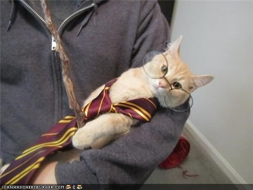costume cyoot kitteh of teh day dressed up Harry Potter movies wizard - 4988109824