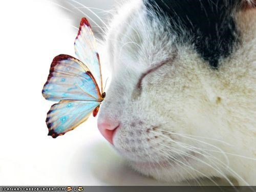 butterflies,butterfly,cyoot kitteh of teh day,Interspecies Love,nose