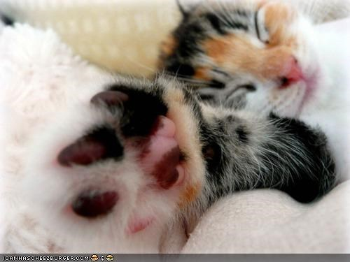 cyoot kitteh of teh day,feet,paw,slap,sleeping,toes