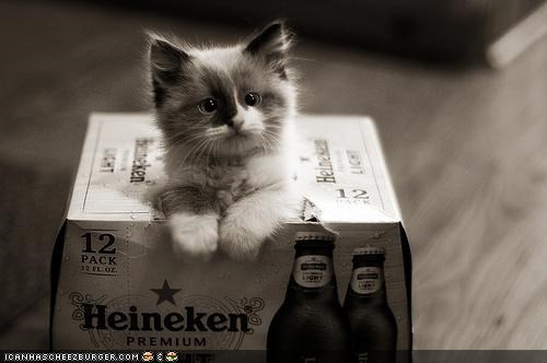 beer,boxes,cardboard box,cyoot kitteh of teh day,Heineken