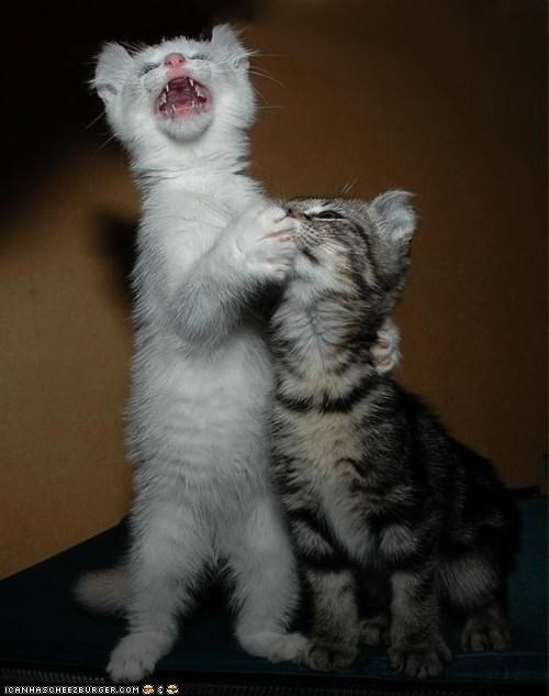 cyoot kitteh of teh day mouth shut up singing standing two cats
