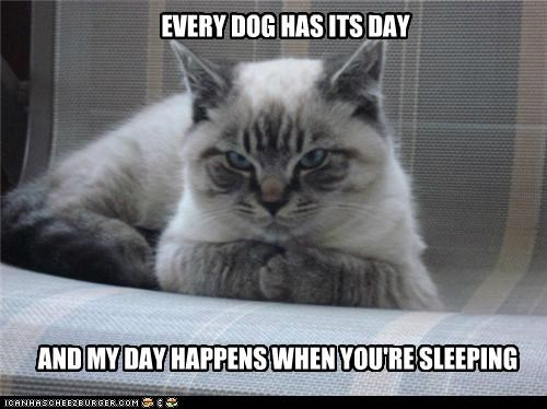 EVERY DOG HAS ITS DAY AND MY DAY HAPPENS WHEN YOU'RE SLEEPING