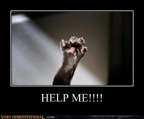 animals cat help hilarious - 4988987648