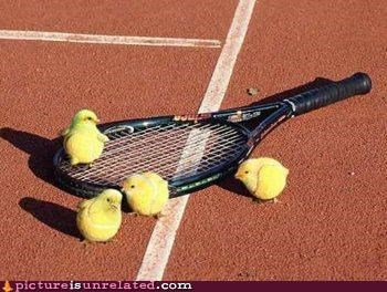 animals,chicks,sports,tennis,tennis balls,wtf