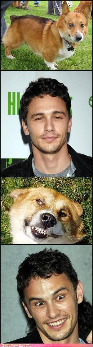 actor,animals,celeb,corgi,funny,James Franco