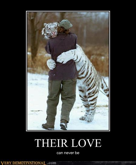 animal hilarious horse love love person tiger - 4990425344