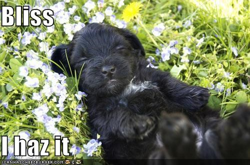 bliss,cute,flowers,happy,happy dog,outdoors,puppy,sleeping,smiling