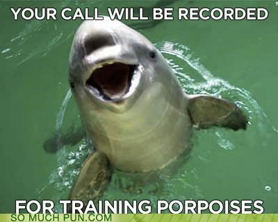 dolphin fyi Hall of Fame literalism porpoise purpose similar sounding training warning
