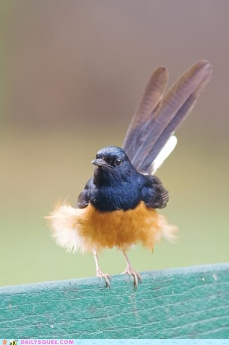 Apropos,bird,nomenclature,shama,whatsit,whatsit wednesday,white-rumped shama