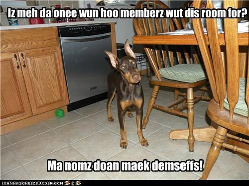 doberman pinscher,food,kitchen,noms,questioning,wondering
