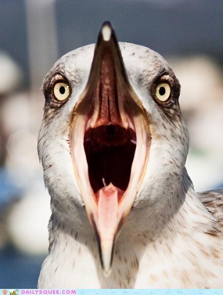 acting like animals au naturel cannot unsee do not want horrified seagull traumatized - 4991842048