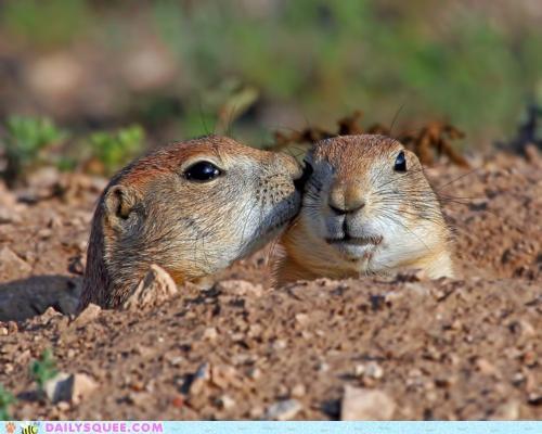 Hall of Fame idea kissing language onomatopoeia prairie dog Prairie Dogs smooch universal - 4991888128