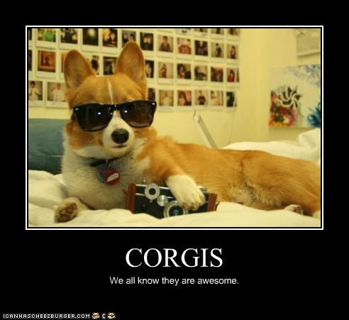 CORGIS We all know they are awesome.
