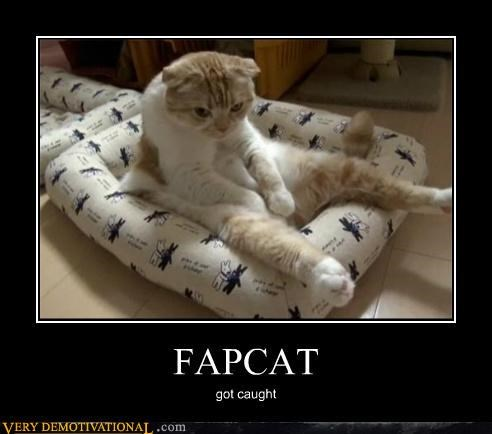 animals cat caught fapping hilarious - 4993243904
