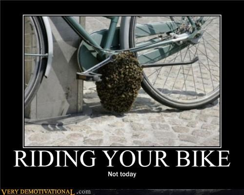 bad idea,bike,hilarious,hornets nest