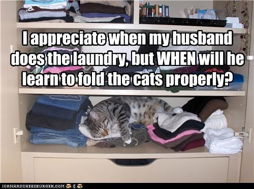caption captioned cat Cats chores clothing FAIL fold husband laundry marriage - 4993691136