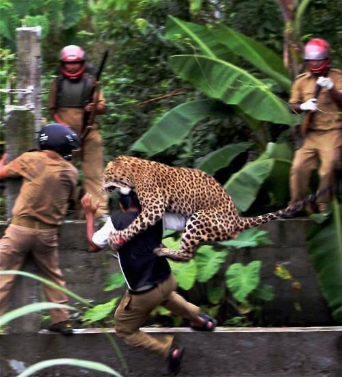 Damn Nature U Scary Photo West Bengal When Animals Attack - 4993816064