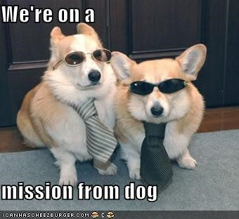 clothing,corgi,corgis,misson,misson from dog,on a mission,sunglasses,ties,we-know-what-were-doing