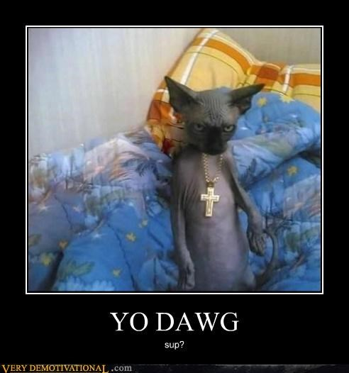 animals cat cross gangsta hilarious yo dawg - 4994456320