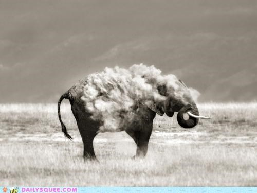 acting like animals,awesome,blowing,dirt,dirt off your shoulders,dust,elephant,Jay Z,parody,song