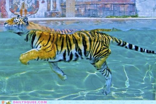 acting like animals adult swim children excited exercising happy no perfect sign swimming tiger - 4994486528