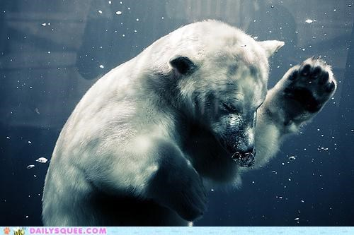 acting like animals,ballet,dancing,excited,invitation,polar bear,solo,underwater