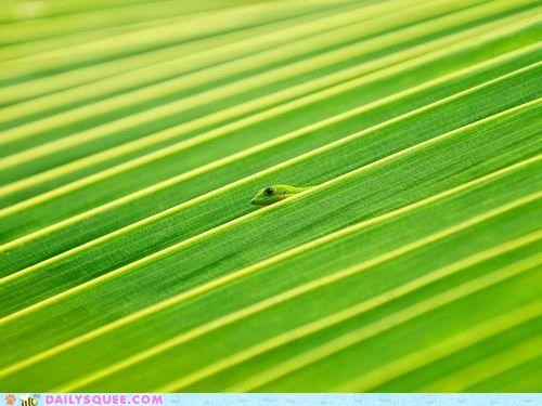 acting like animals blending brain color floating green illusion leaf lizard mind trick - 4994531328